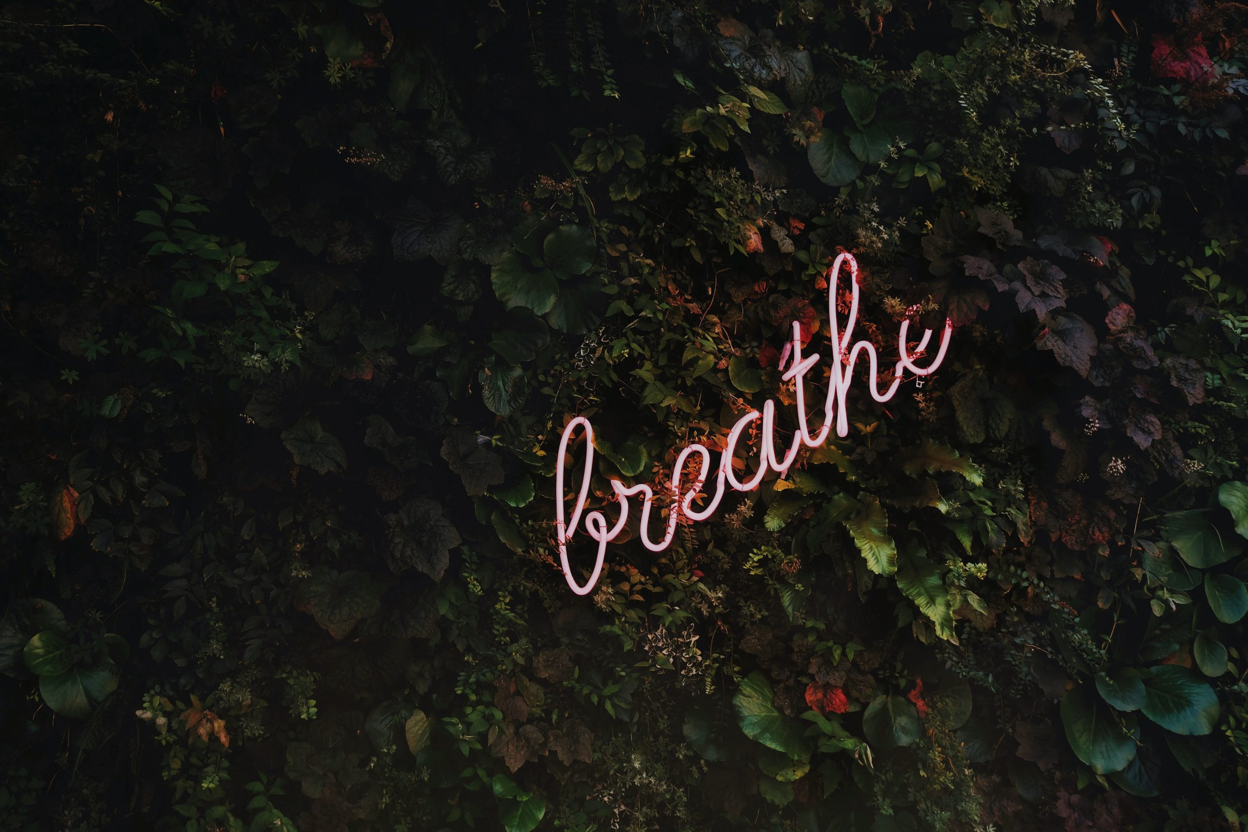 pink-neon-breath-4-steps-to-break-the-anxiety-cycle